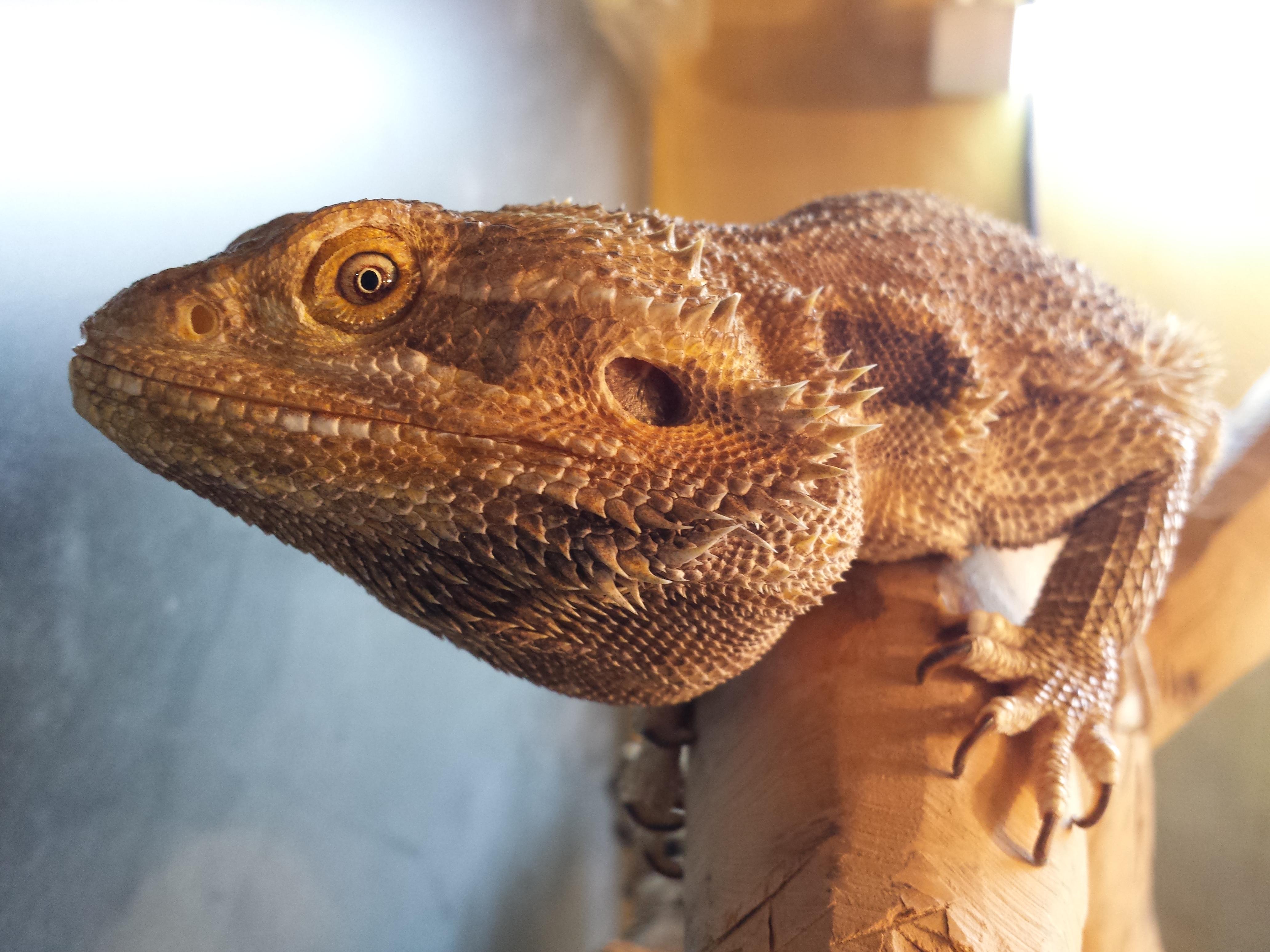 Lizard_watching