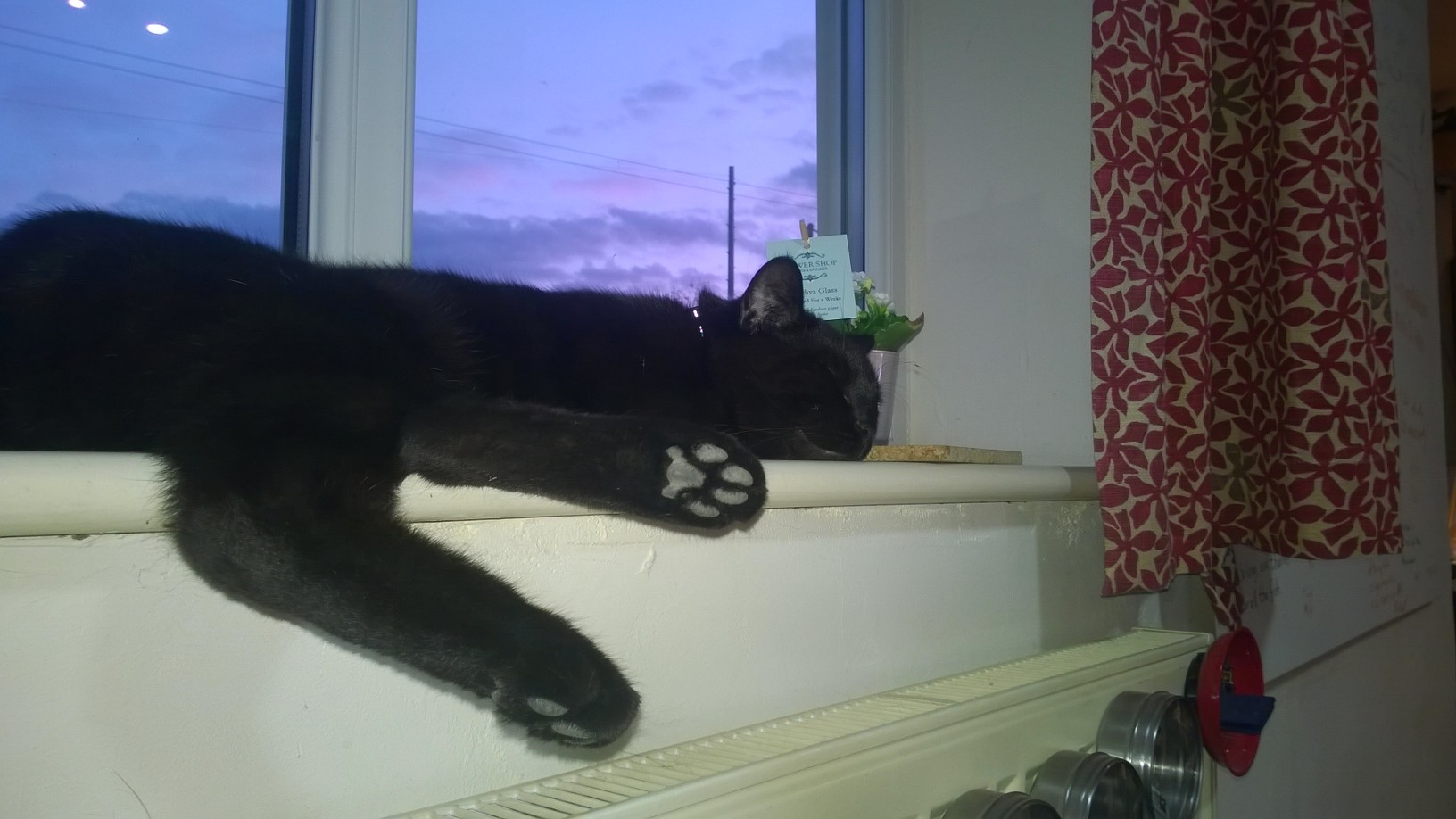 Frankie asleep