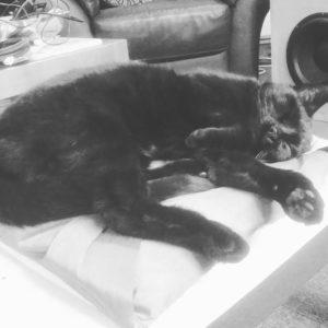 black cat asleep