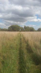 Field of grass, Oxford September 2018