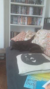 Two black cats curled on the sofa, october 2018