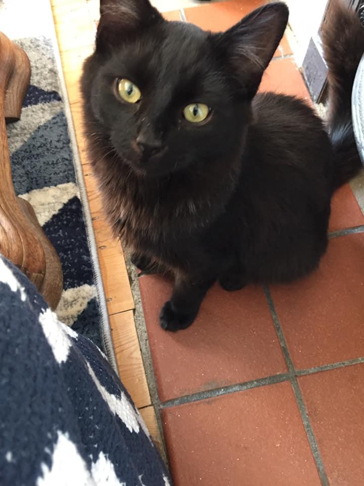 Peter cat Oct 18