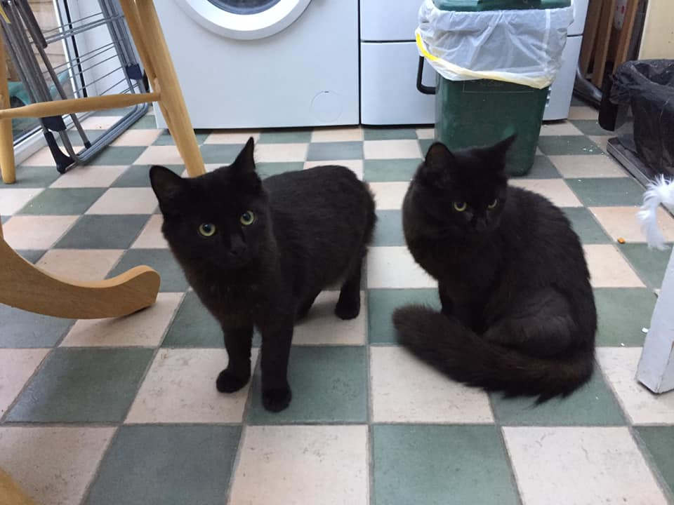 Two black cats; Peter and Jodie
