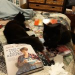 Both cats on my bed + cookbook + drawing pad