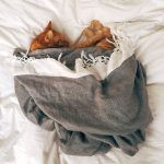 Ginger cat asleep in a blanket