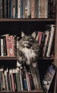 Cat on the middle shelf of a bookshelf