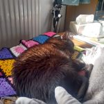 A black cat asleep in the sunshine on a knitted rug