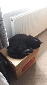Cat asleep on a cardboard box