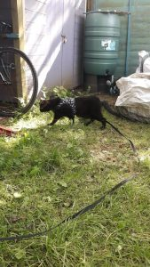 Bobble-cat in the garden
