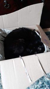 Cat asleep in a box