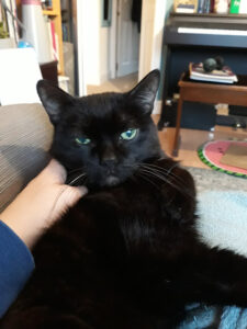A cat glaring while being scritched